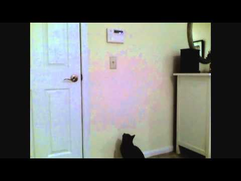 Kitty Against Energy Waste