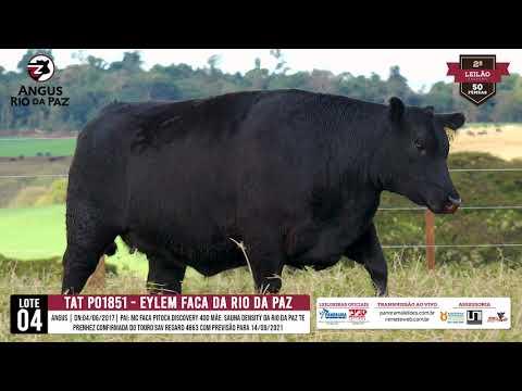 LOTE 04   PO1851 EYLEM FACA DA RIO DA PAZ - Pro. Agência e TV EL Campo
