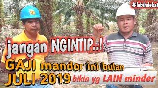 Jangan Ngintip Gaji Mandor Panen Kelapa Sawit Tertinggi Juli 2019 Bikin Yang Lain Minder Youtube
