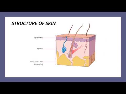 Integumentary System - Medical Coding Part - I