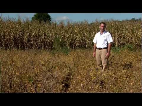 Herbicide Resistant Weeds - University of Missouri