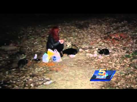 Covington Woman Spends $600 Per Month To Feed Dozens Of Feral Cats
