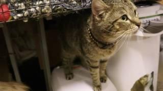 кошка Капитолина, 1 год+, стерилизована, ищет дом. Спб