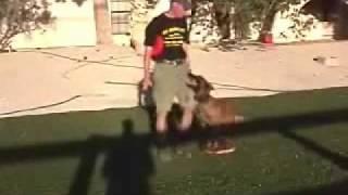 Sit Means Sit Atlanta - Decatur Dog Training - Rescue Dog