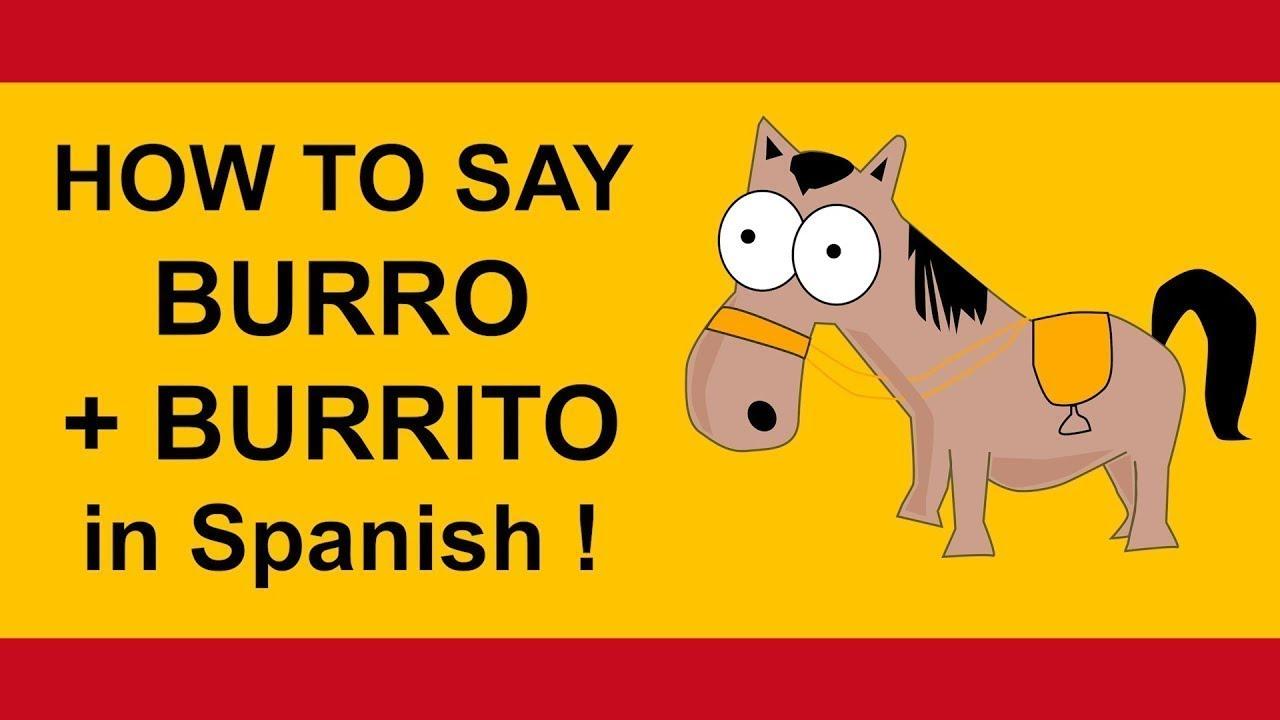 How To Say Burro And Burrito In Spanish Tutorial Youtube