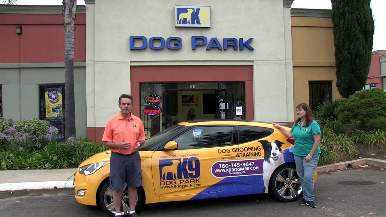 Training Your Dog To Park It