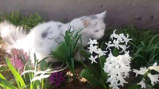 БРОШЕННЫЙ КОТЕНОК #32 Играющий котенок, милый котенок Лапик озорничает!