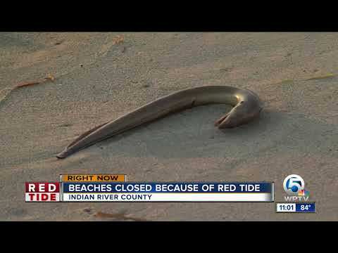 Beaches closed in Indian River County for red tide