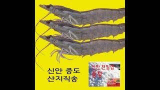 1KG 신안군 증도 오늘 산지직송 흰다리새우 왕새우 생…