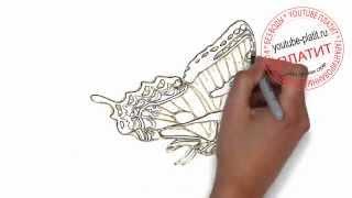Как нарисовать карандашом пеструю бабочку на ногтях(Как нарисовать бабочку поэтапно простым карандашом за короткий промежуток времени. Видео рассказывает..., 2014-06-29T07:22:02.000Z)