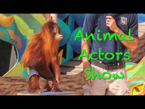 Universal Studios Hollywood Part 5 - Animal Actors Show