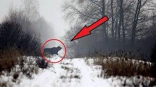 To, co Naukowcy odkryli w Czarnobylskim Lesie, poruszyło cały świat!