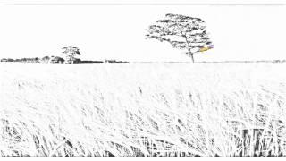 Auto Draw 2: Barley Field, North Somerset, United Kingdom