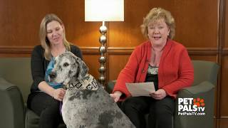 Pets and people share health concerns
