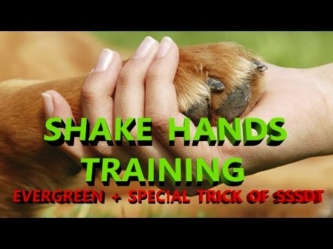 Teach Your Dog Shake Hand : dog training in hindi