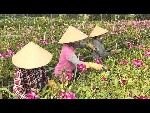 Người dân xã nông thôn mới của TP. Hồ Chí Minh thu nhập trên 49 triệu đồng/năm