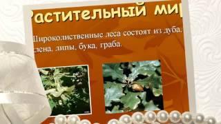 Презентация на тему Зона лесов