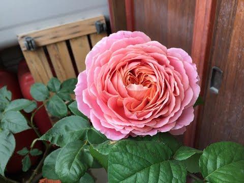 Flower168 妻の残した…