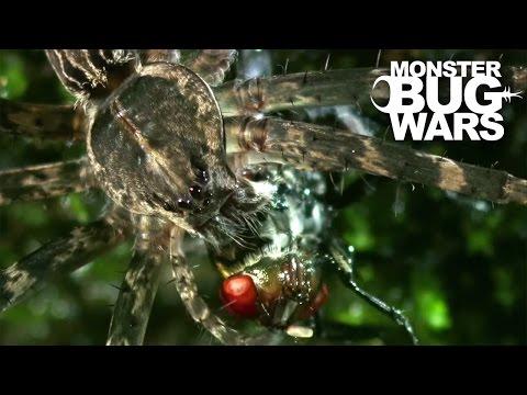 Water Spider Vs Water Strider   MONSTER BUG WARS