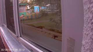 Подглядываем с окно