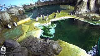 KC Zoo Penguin Cam 4K