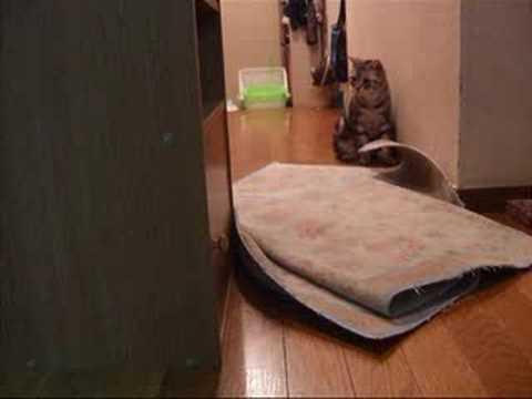 Download 子猫にたじたじ~猫(=^・^=) When RARA was kitten