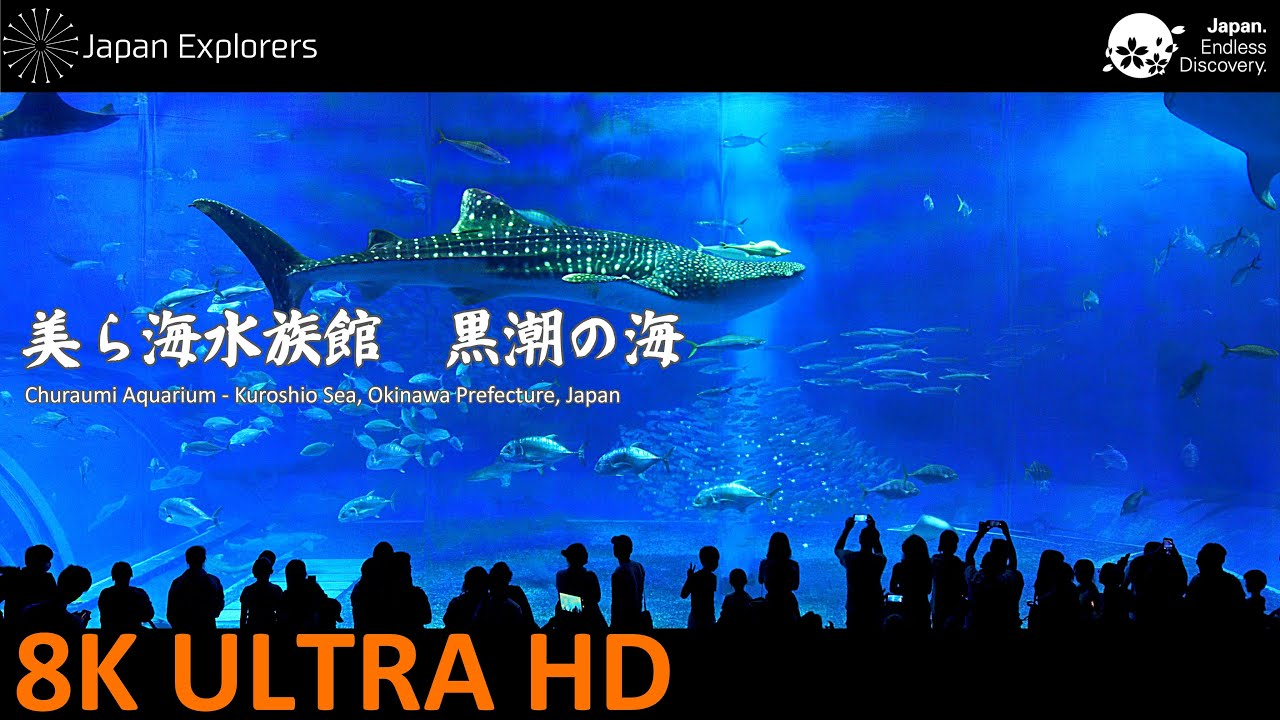 Churaumi Aquarium Kuroshio Sea Okinawa