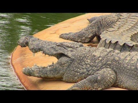 Крокодиловая ферма на острове Джерба в Тунисе