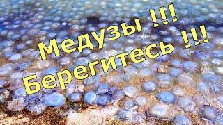 Медузы в Азовском море село Генгорка Арабатская стрелка. Купаться невозможно