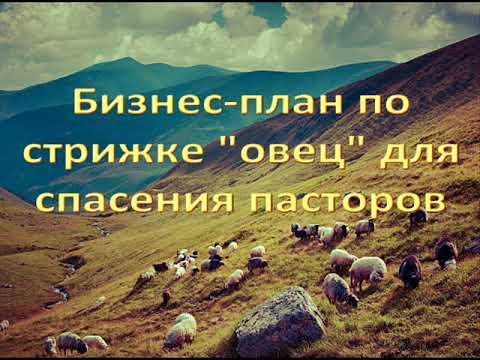 Бизнес-план по стрижке ''овец'' для спасения пасторов