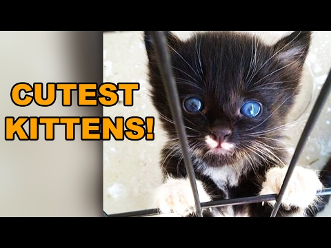 25 Cute Kittens That Will Make Your Day Better!