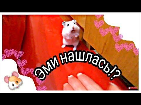 Нашлась ли Эми? Как поймать хомяка? Тоша убежал?