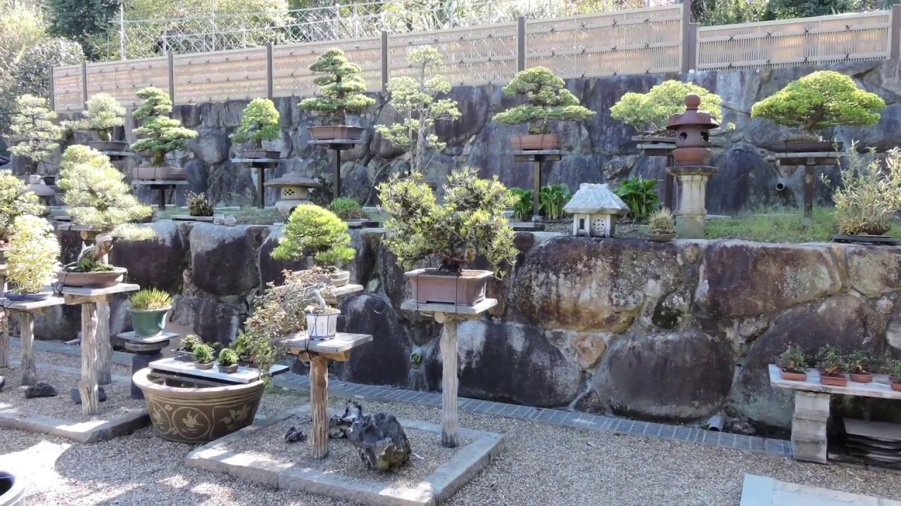 Miurabaiju En Bonsai Nursery Osaka