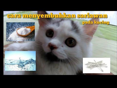 cara-menyembuhkan-sariawan-pada-kucing-||-sangat-mudah