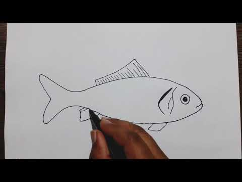 How To Draw A Fish Step By Step