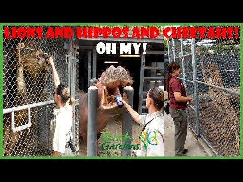 Busch Gardens Heart of Africa Tour - Southern Exploring