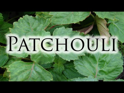 Herbs, Roots & Resins - Patchouli