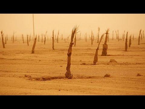 مستثمر كويتي يسعى لإقامة مشروعات زراعية بالعراق  - نشر قبل 2 ساعة