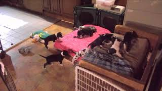 Poohs 4amish to 430am 3242018 reese nursing then Rabbit fall ends thumbnail