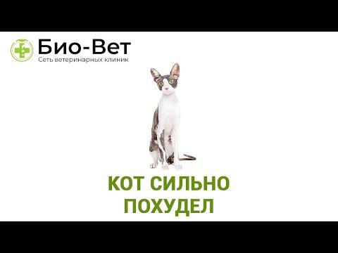 Вопрос: Почему коты толстеют?