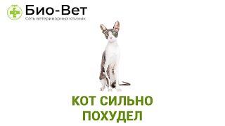 Кот сильно похудел. Ветеринарная клиника Био-Вет.