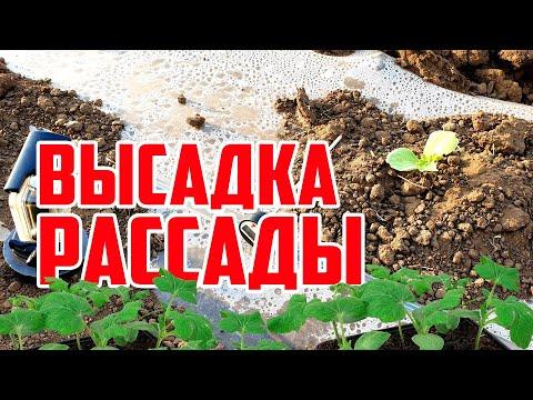 Вопрос: Когда сажать арбузы в грунт в Самарской области в 2020 году?