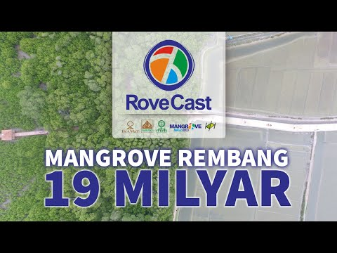 Mangrove Rembang 19 Milyar Mangrovemagz Com
