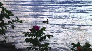 Kiitoslaulu - Hengellinen osa Veteraanin iltahuuto -lauluun