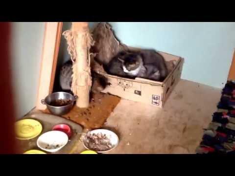 Вопрос: Почему кот не ест мышь?