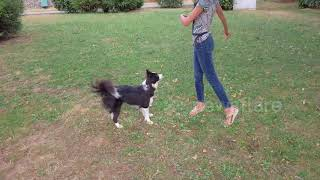 This 2yearold border collie nails impressive dance routine with her owner
