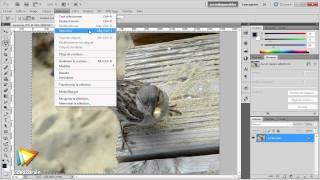 Photoshop CS5 : Flou sur l'arrière-plan pour mettre en valeur le sujet