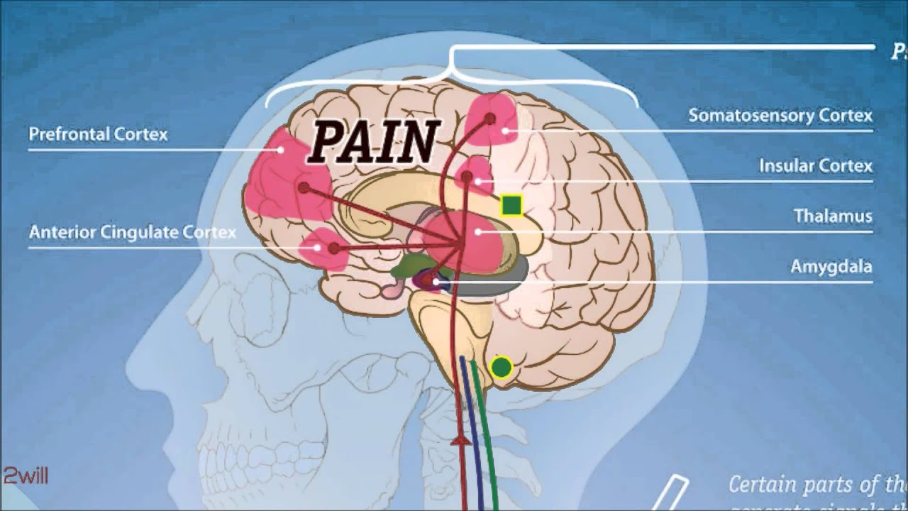 small resolution of pain pathway