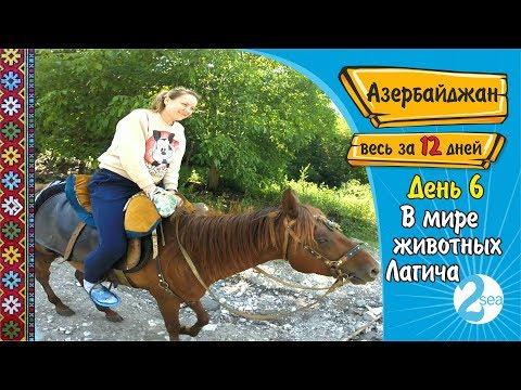 #10. Путешествие в Азербайджан. Лагич. В мире животных Лагича. День 6. Весь Азербайджан за 12 дней