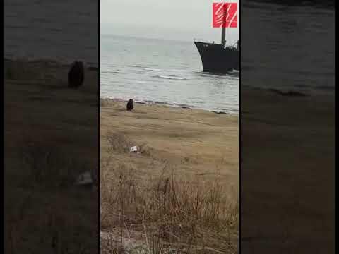 Медведь вышел на пляж в Углегорском районе (район корабля)